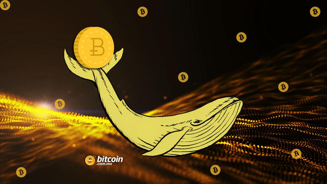 Ballena mueve $1,100 millones USD en Bitcoin por solo 83 USD